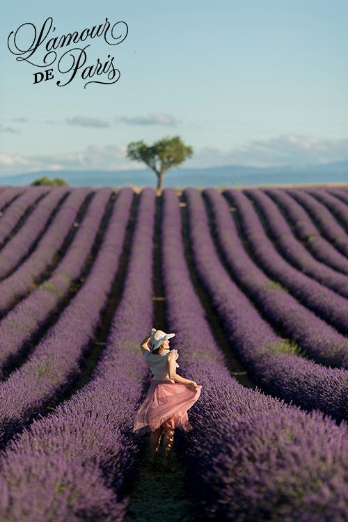 provence lavender fields valensole france 03