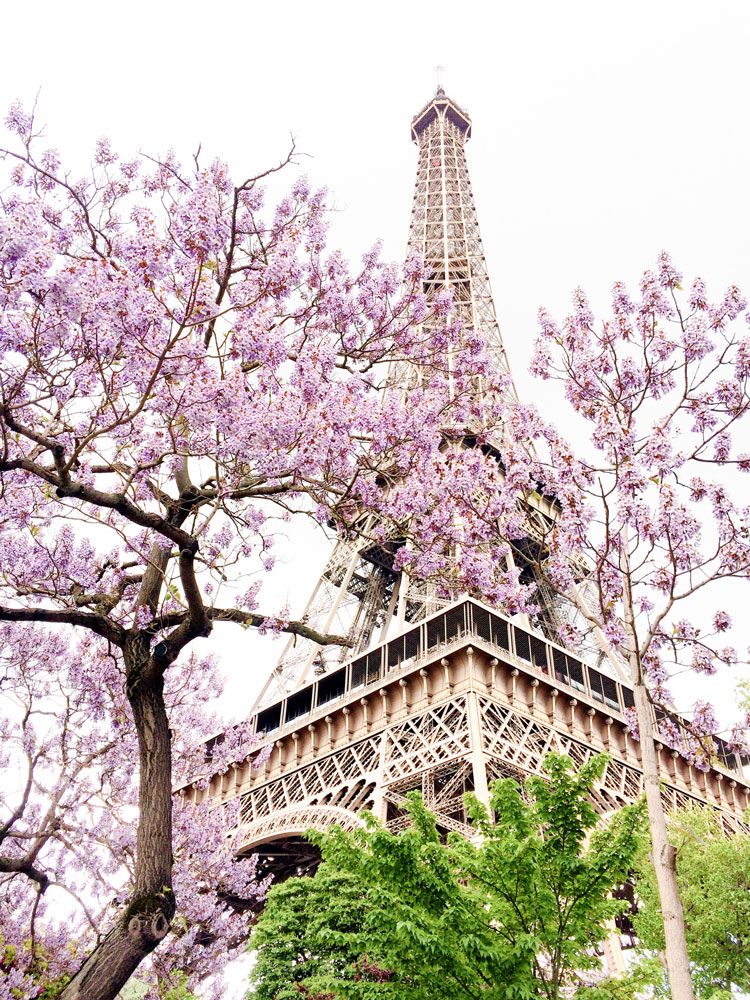 eiffel tower in the spring with purple trees